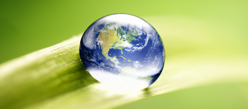 Image of a globe on a leaf