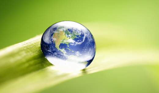 Image of globe water droplet on leaf